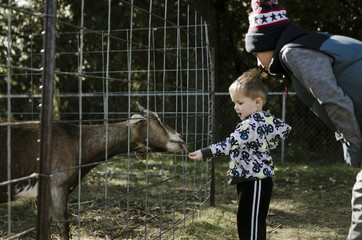 Boy looking at brother feeding goat
