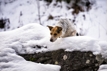 Dog on the rocks in the snow