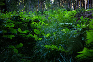Green forest in summer day. Many herbs and plants.