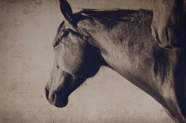 Antique grunge horse head on the farm.  Great backdrop or decor print.