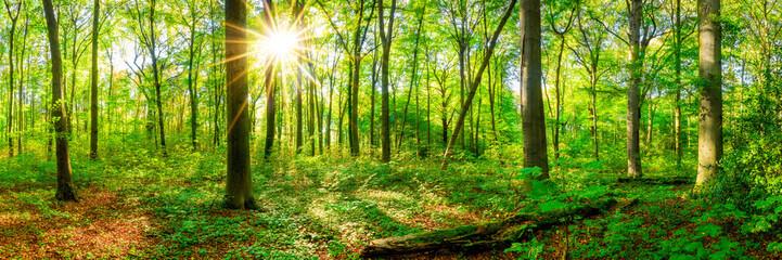 Wall Mural - Wald Panorama im Frühling mit Sonne