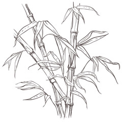 hand drawn illustration with bamboo stalk and leaves. vector eps 8