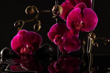 Rote Orchideen mit Wasserspiegelung