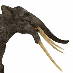 Stegotetrabelodon Elephant Head - Stegotetrabelodon was an elephant that lived in the Miocene and Pliocene Periods of Africa and Eurasia.