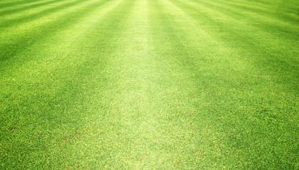 grass background Golf Courses green