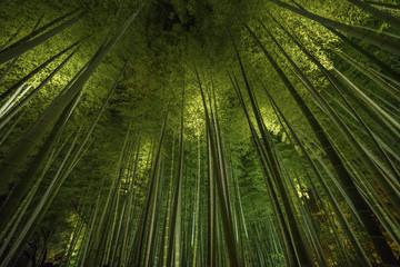Spoed Foto op Canvas Bamboo Bamboo grove, bamboo forest in Arashiyama, Kyoto, Japan