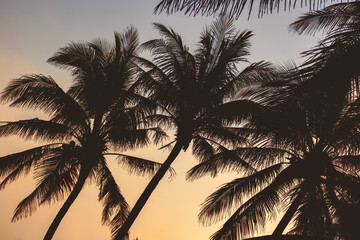 Palm trees silhouette at sunset in Hainan Island - China