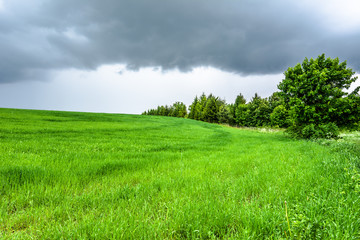 Green field, landscape, spring meadow with grass.