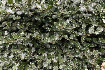 Holly Wall