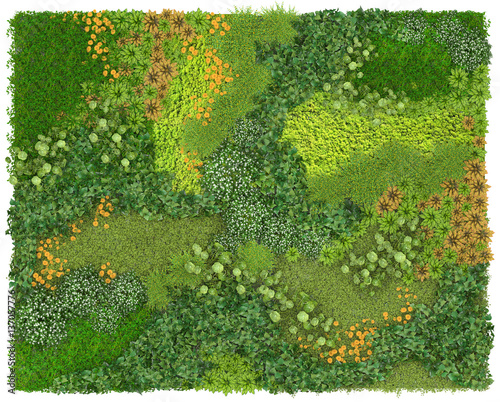 Vertical Garden Background And Texture Green Wall Or Flowerbed Isolated On White BackgroundTop