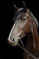 Art portrait of beautiful breed sportive stallion at dark background
