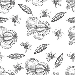 Hand made vector seamless sketch of mandarins in vintage style.