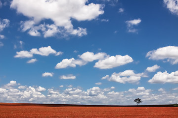 Australian countryside landscape with open sky, Queensland, Australia