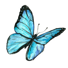 Illustration of a blue butterfly painted by hand with watercolor