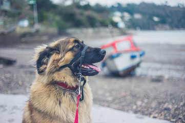 Leonberger dog by the seaside