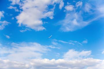bright sunny summer day in high blue sky freely hovering kite flying stork