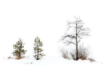 Small trees in foggy winter landscape