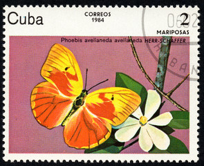 UKRAINE - CIRCA 2017: A stamp printed in Cuba, shows image of a butterfly Phoebis avellaneda HERR-SCHAFFER close-up, circa 1984