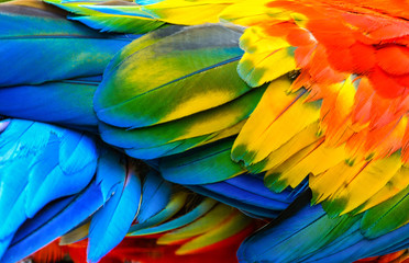 Foto op Canvas Papegaai Close up of Scarlet macaw bird's feathers.