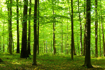 Papiers peints Forets Sunlight in forest