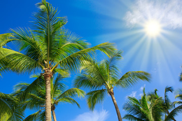 Beautiful tropical sunshine with palm trees and sun.