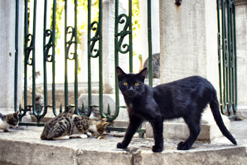 Beautiful black cat with yellow eyes looks at the camera. Tabby / striped stray one eat food. It's Galata area of Beyoglu district in Istanbul