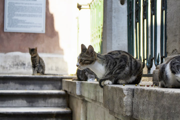 Tabby / striped stray cats. It's Galata area of Beyoglu district in Istanbul