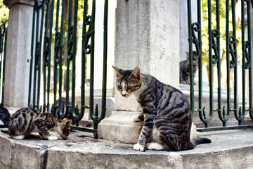 Beautiful tabby / striped stray cats. It's Galata area of Beyoglu district in Istanbul