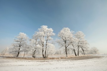 Winter trees on a sunny morning