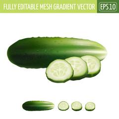 Cucumber on white background. Vector illustration