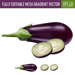Eggplant on white background. Vector illustration
