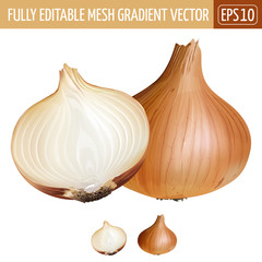 Onion on white background. Vector illustration