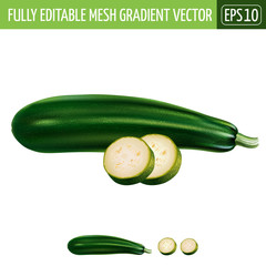 Zucchini on white background. Vector illustration