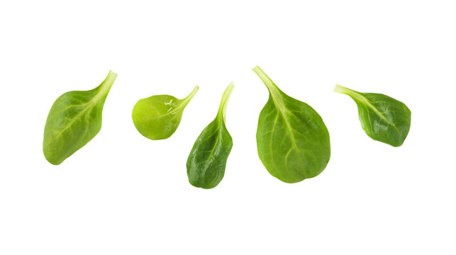 fresh corn salad leaves