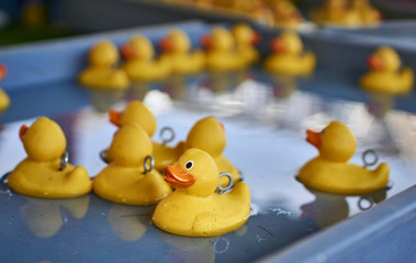 Many yellow rubber ducks floating on a large tray of water
