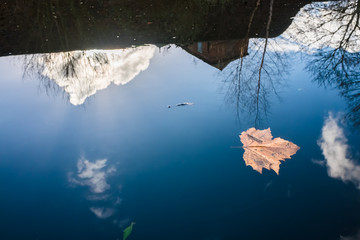 Fallen leave and reflection at Birmingham canal water surface