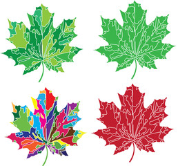 set of four maple leaves in posterized style in various colors