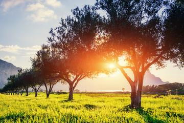 Tree shadow with sunset. Beauty world. Sicily. Italy. Europe