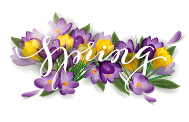 Word spring with flowers crocuses. Spring background concept. Vector