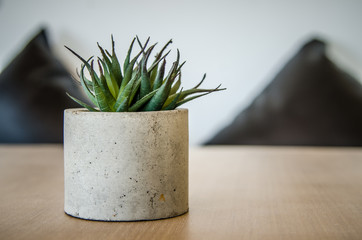 Small cactus in a pot for the table decorations