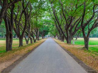 Asphalt Country Road Between Line of Trees