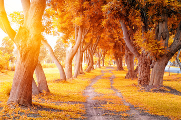 Beautiful autumn tree tunnel with falling golden leaves on a sunny day