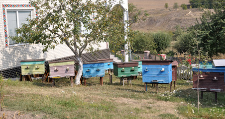 A small amateur apiary near private homes and trees