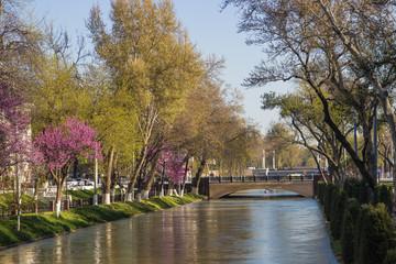 bridge over the river in the centre of the Tashkent, Uzbekistan. Eastern Redbud flowering in early spring