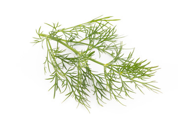 Fresh dill on the white background.
