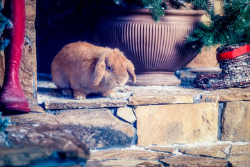 Rabbit is sitting on the stairs