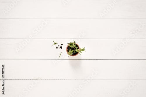 frische kr uter rosmarin im topf table top immagini e. Black Bedroom Furniture Sets. Home Design Ideas