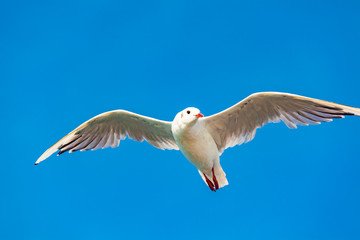 view of a seagull on the sea
