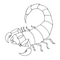 Scorpion coloring book. Vector outline illustration scorpio.