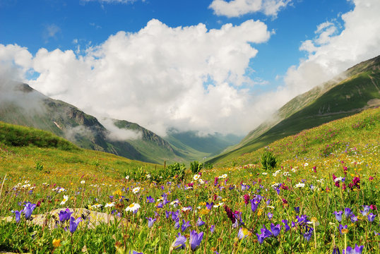 Alpine meadows in the Caucasus summer. Blue sky with white clouds. Flowers in the foreground.